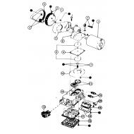 Courroie JABSCO pompe série 3600 – 36680 – 36950